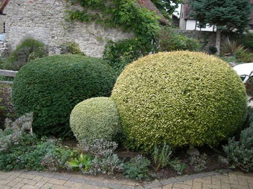 Gardener - Professional Gardening, Hedge Cutting, Topiary & Pruning Specialist - RHS Wisley trained, Wantage Oxfordshire